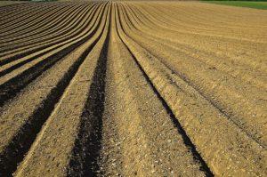 crop, furrows, soil