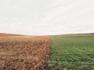 farmland, meadow, field
